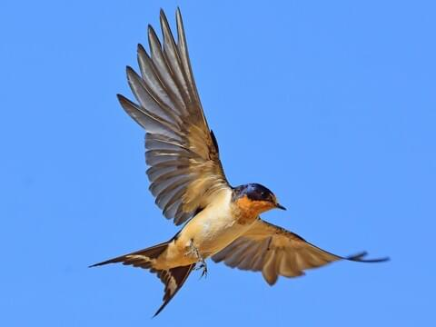 Swallow more me will if i like he Swallow The