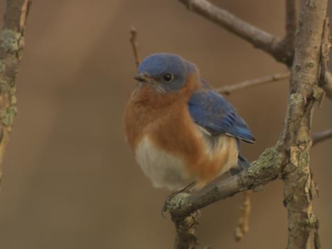 In a Bluebirds Eye
