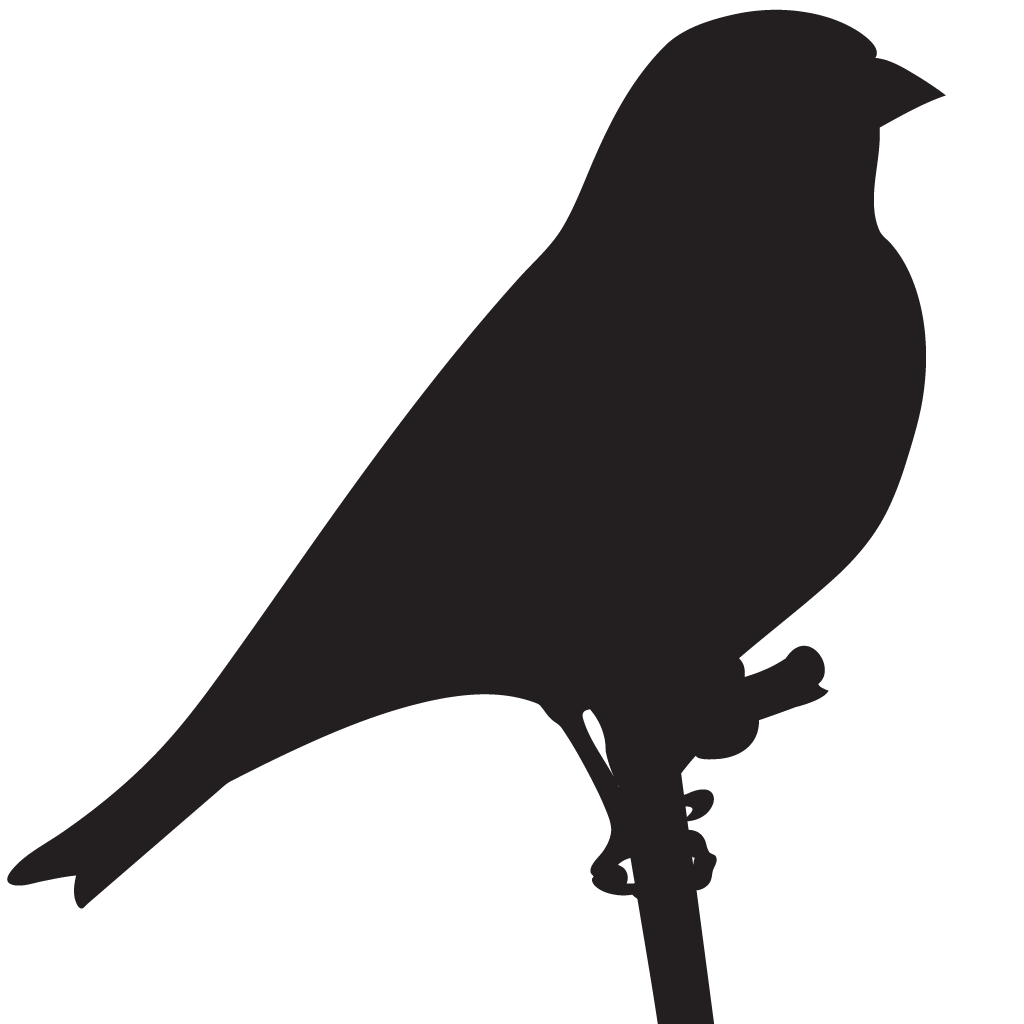 Silhouette Finches