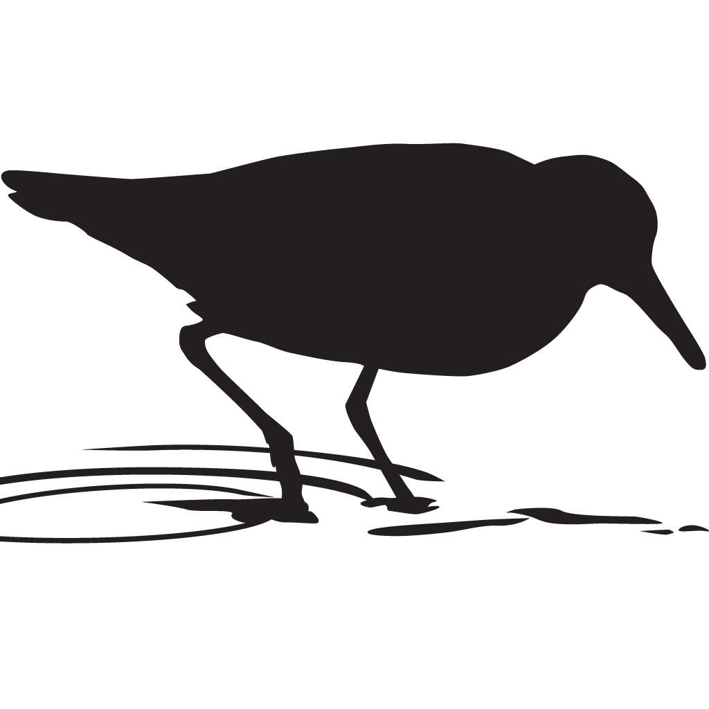 Silhouette Sandpipers