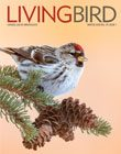 Living Bird, Winter 2020, Common Redpoll by Mike Lentz.