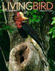 Living Bird, winter 2019, Helmeted Hornbill by Tim Laman