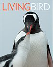 Living Bird winter 2016, photo of Gentoo penguins by Chris Linder