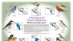 A Rainbow of Tropical Migrants: Where Are They in Winter?