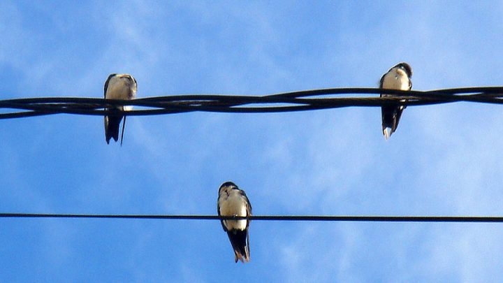 I often see birds on telephone wires while I\'m driving—how do I ...