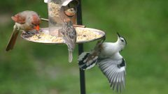 How to Choose the Right Kind of Bird Feeder