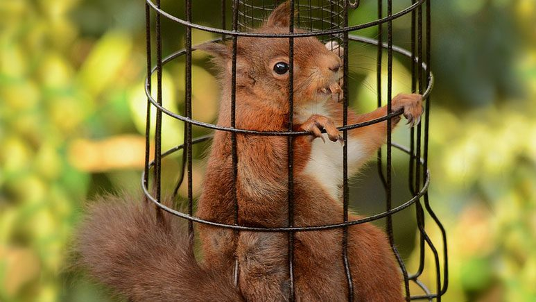 How Do I Keep The Squirrels In My Yard Away From My