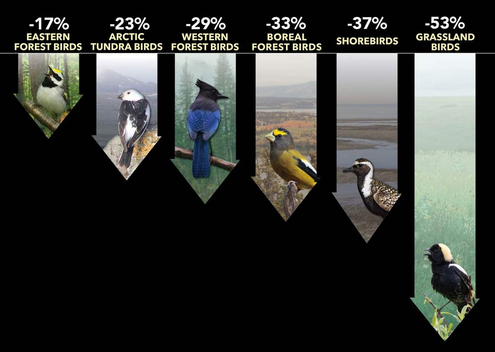 declines in many groups of North American birds