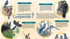 How Do Birds Cooperate? An Overview of Strategies