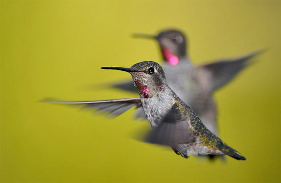You Re Seeing Fewer Hummingbirds At