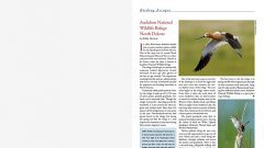 Birding Escapes: Audubon National Wildlife Refuge North Dakota