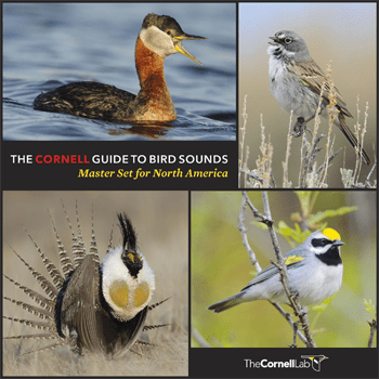 Cover of Master Set of Sounds from the Cornell Lab of Ornithology