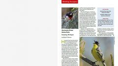 Birding Escapes: Hartwick Pines State Park: Grayling, Michigan