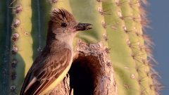 Birding Escapes: Gilbert Water Ranch, Arizona