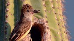 Birding Escapes: Gilbert Water Ranch, Arizona