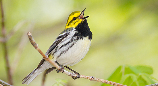 Our Review Best Iphone Apps For Learning Bird Songs All