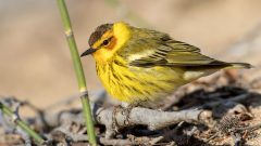 Birding Tips: On Cold Spring Mornings, Spend Some Time in the Sun