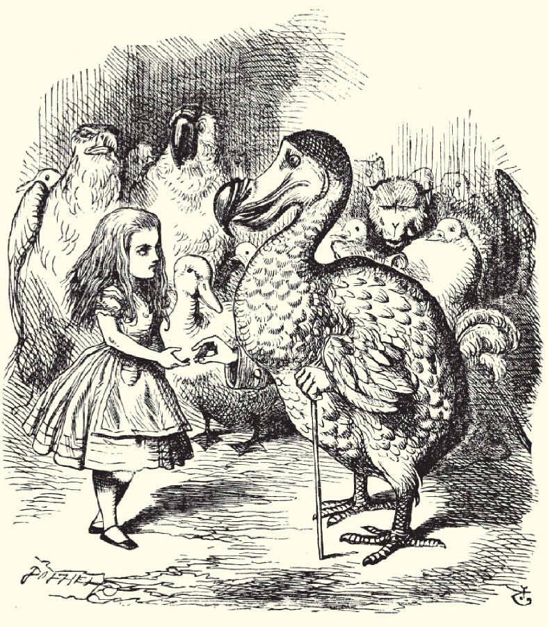 John Tenniel's famed Dodo illustration from Alice in Wonderland is probably not that far from what the birds really looked like.
