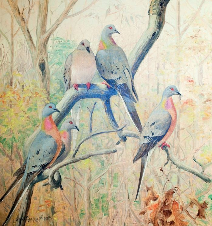 A Tale Of Three Superdoves The Dodo The Rock Pigeon And