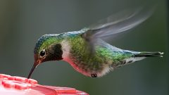 Summertime in the United States of Hummingbirds