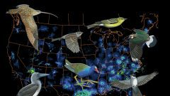 Eight Intriguing Migration Mysteries Solved With BirdCast and eBird