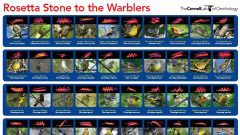 A Rosetta Stone for Identifying Warblers' Migration Calls