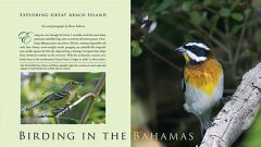 birding in the bahamas