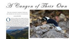 mexico's endemic tufted jay and ecotourism