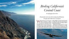 Birding California's Central Coast
