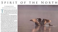Spirit of the North: the Common Loon