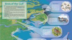 Birds of the Gulf Threatened by Oil Spill, Illustrations by John Schmitt, map iIllustration by Joanne Avila