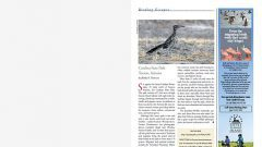 Birding Escapes: Catalina State Park, Tucson, Arizona