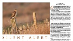 Silent Alert: The Cooper's Hawk's Reputation Precedes It