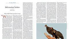 Information Seekers: Roosting Black Vultures