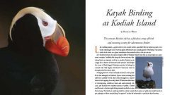Kayak Birding at Kodiak Island, Alaska puffin