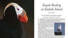 Kayak Birding at Kodiak Island, Alaska puffin