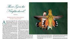 territoriality in birds