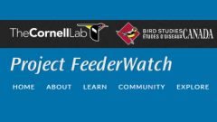 Project FeederWatch: Join, Renew, or Donate