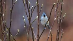 Coping with Cold: A Bird's Strategy
