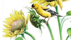 PFW-creating a garden for birds
