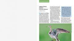 Birding Escapes: Tallgrass Prairie Preserve, Oklahoma