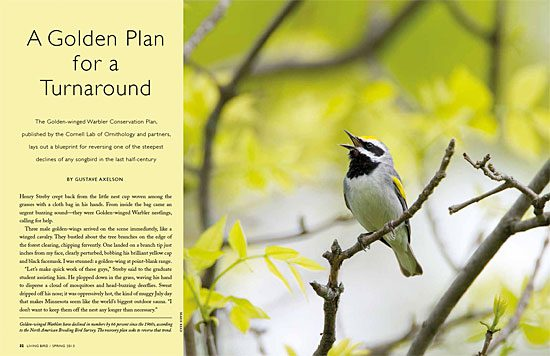 Golden-winged Warbler conservation plan