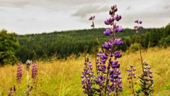 Bird-Friendly Tips for Meadows and Grasslands