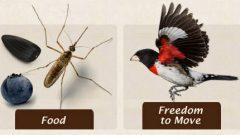 tips for bird friendly habitat