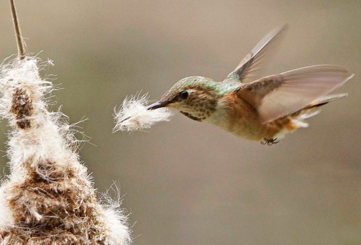 Image result for things birds use for nests