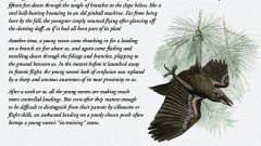 A Naturalist's Notebook: Young Raven Learns to Fly