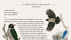 Naturalist's Notebook: Lewis's Woodpecker and Western Scrub Jay