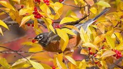 The Best Trees, Vines, and Shrubs to Plant for Birds: a Starter List