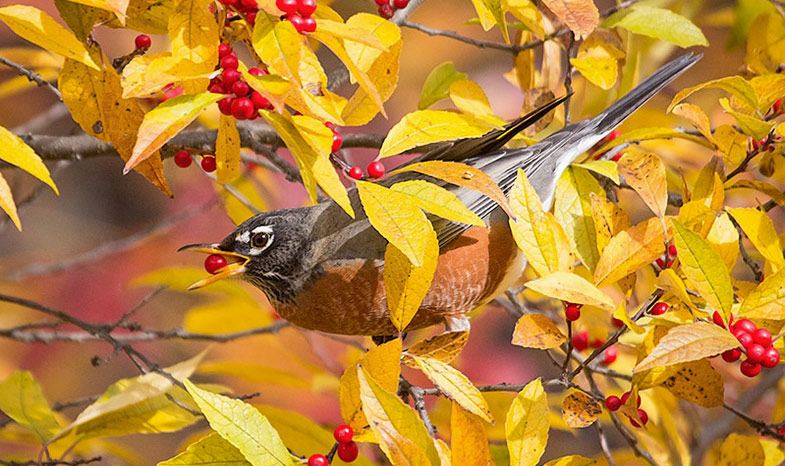 The Best Trees Vines And Shrubs To Plant For Birds A Starter