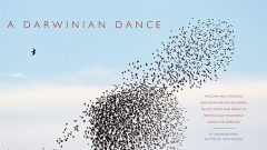 In Murmurations, Starlings Have a Darwinian Dance Partner